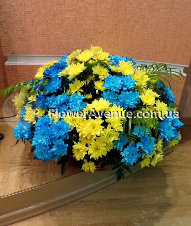 Цветов купить киев хризантемы комнатные, цены на букет из крупных ромашек